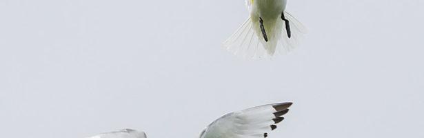 Exposición 'Aves'